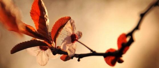 spring-maisons-laffitte-7