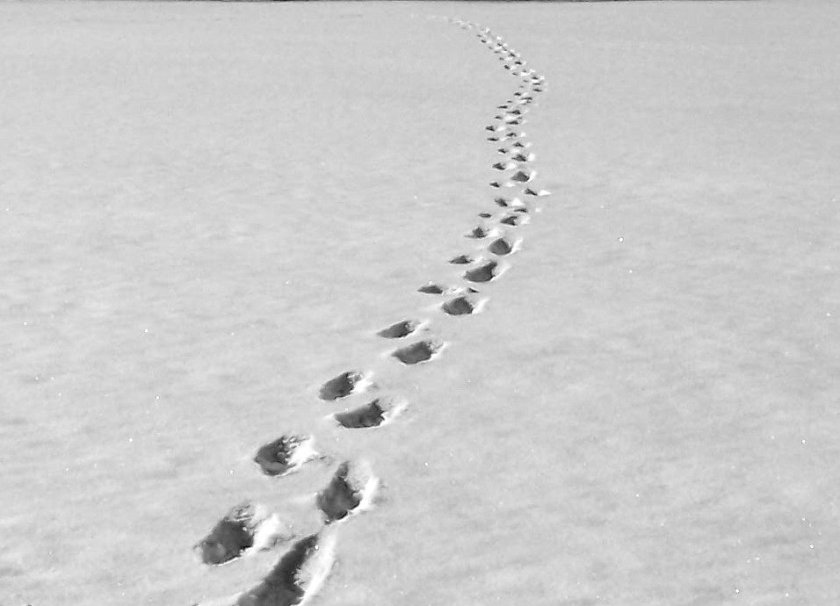 Footprints in Fresh Snow