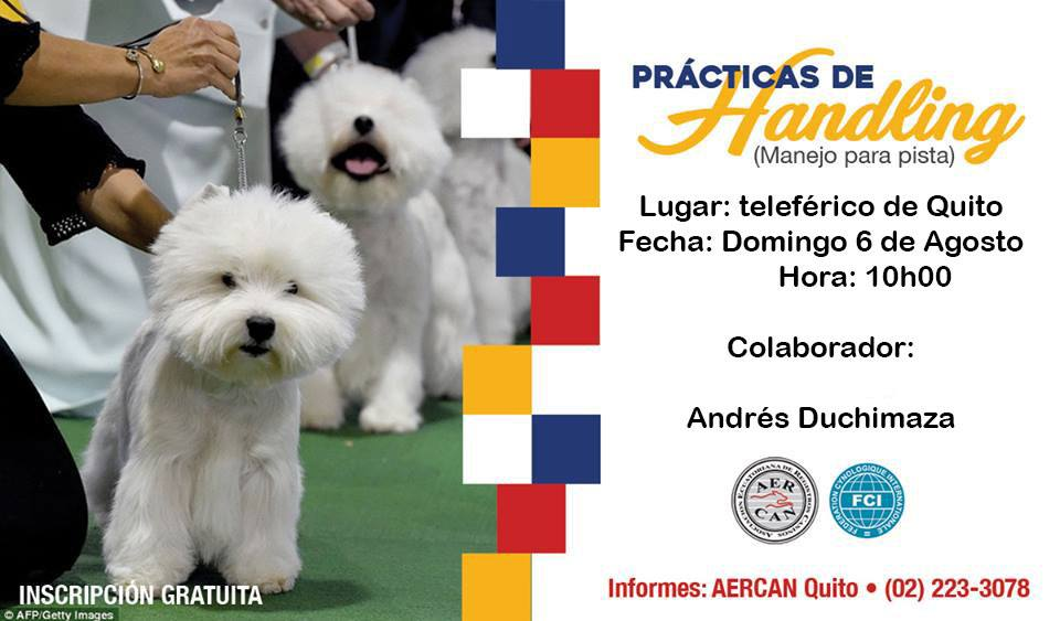 HANDLING CON ANDRES DUCHIMAZA