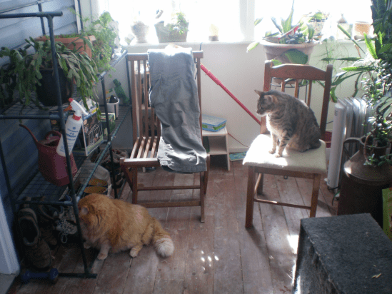 Cats in Cathi's 'Zen Corner'.