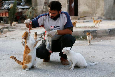 Man Feeding Cats.