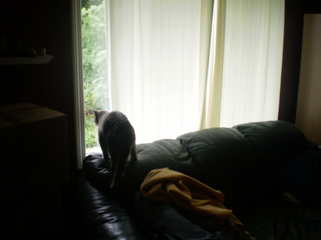 """""""Max - peering out a window"""""""