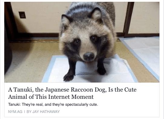 Tanuki / Raccoon-Dog
