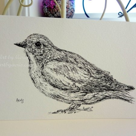 Bird Art Drawing