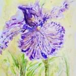Purple Iris Painting