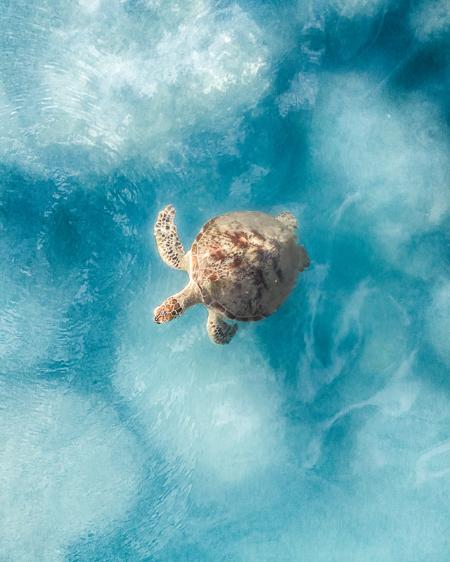 Drone of Turtle in Ocean