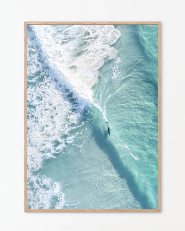 Dolphin Wall Art Print