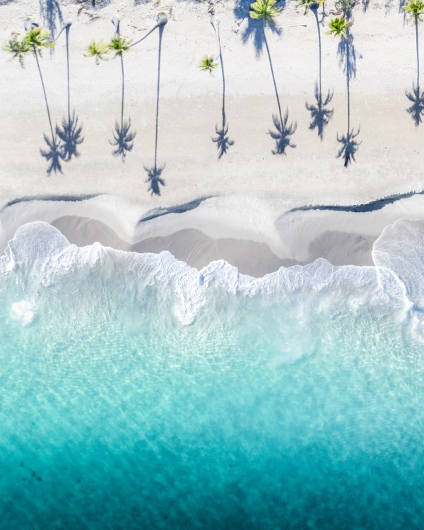Tropical Palm Tree Wall Art Print