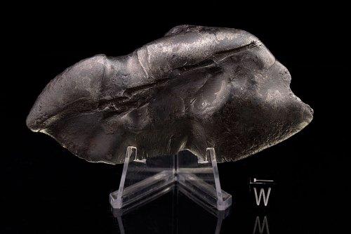 Sikhote-Alin 316.0 Grams