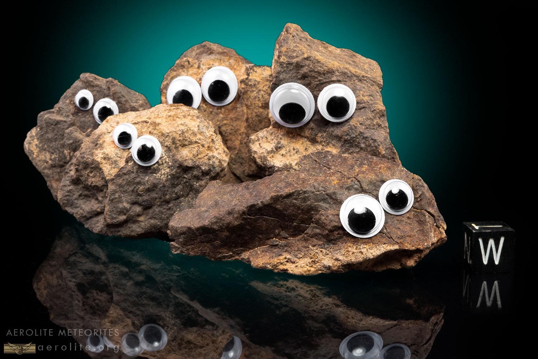 Pet-Rock-i