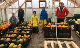 pumpkin team