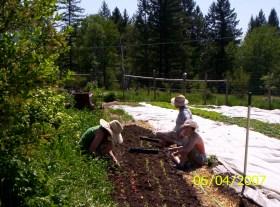 vol.-day-lettuce-planting.jpg