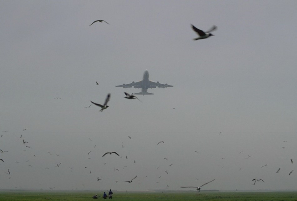 Bird-strike-2