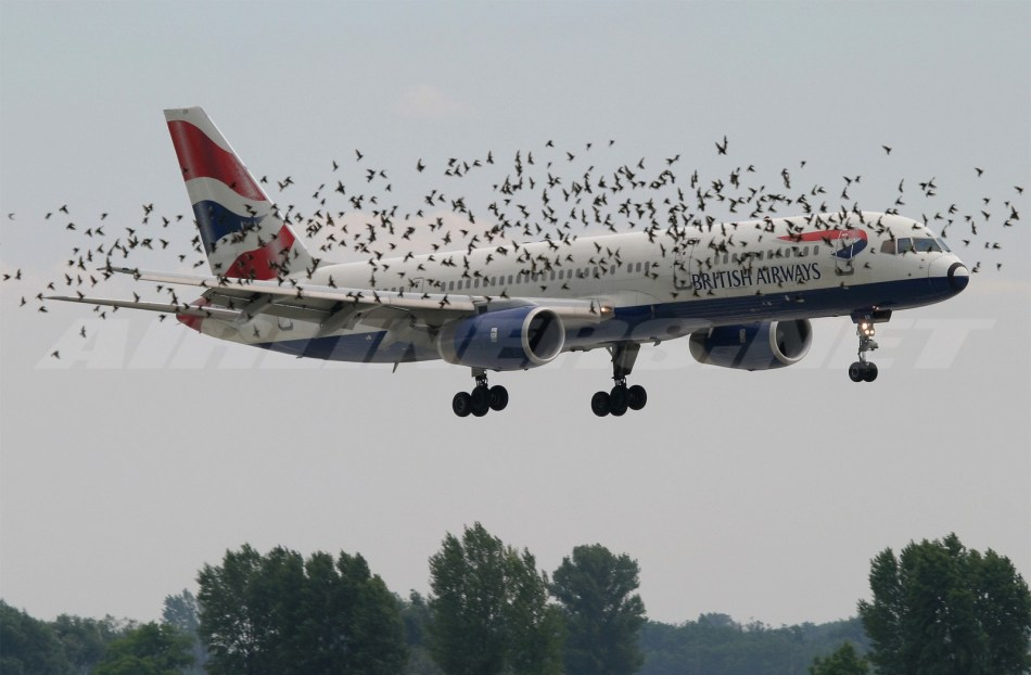 Bird-Strike