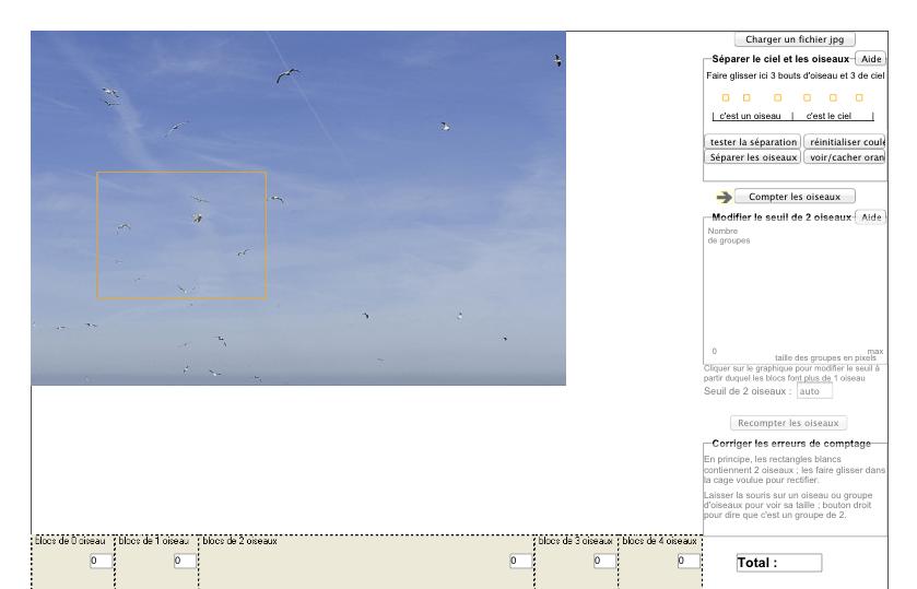Comptage oiseaux 1