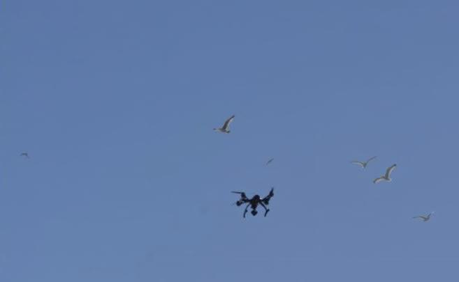 drone et oiseaux