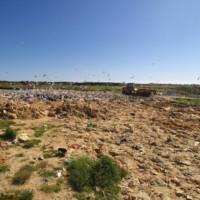 Goélands et zone d'enfouissement de la déchèterie de Chubiguer à Belle-île-en-mer (56) – © Denis JEANT