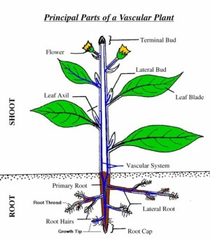 Aeroponic Plant Roots – Healthy Plants have Healthy Roots