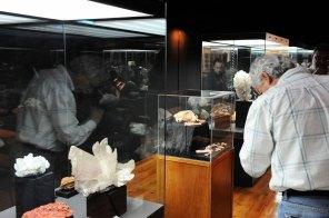 web-r-Museu-Geológico-Lisboa-Leopardo-FTR_3033