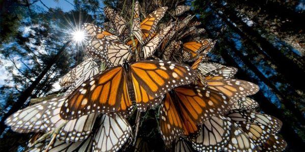 Wisata Alam Liar Yang Harus Anda Kunjungi