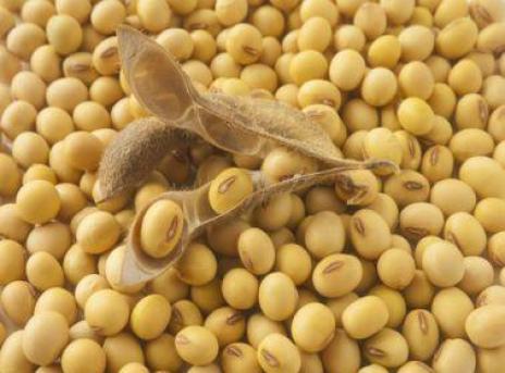 Fungsi protein dalam Makanan Tinggi Protein