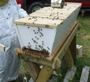 Top bar hive 1