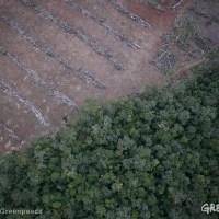 Diminuer les ravages de l'huile de palme