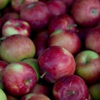 Zéro gaspillage - Les pommes