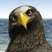 Kirae the Stellar's Sea Eagle