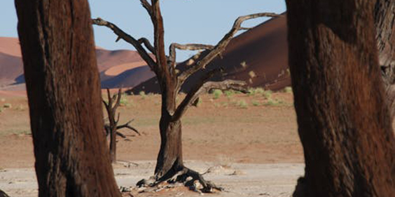 Drought-1_564x282