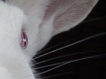 I love this picture too - Olaf's eye looks like a pretty glass marble.