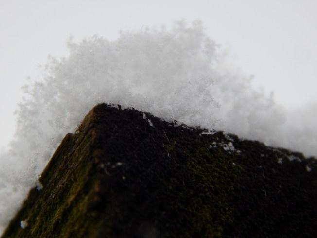 Allison(snow, bookmark) 030 (1280x960)