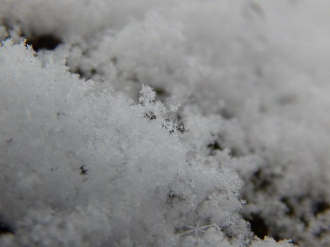Allison(snow, bookmark) 038 (1280x960)