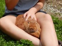 -Allison(birthday hike, bunnies) 189 (1280x960)
