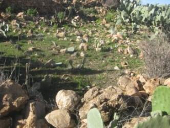 IMG_1483-300x225 مبادرة من نساء أفيان  لغرس أكناري بجنان واكراراض أخبار آفيان فلاحة