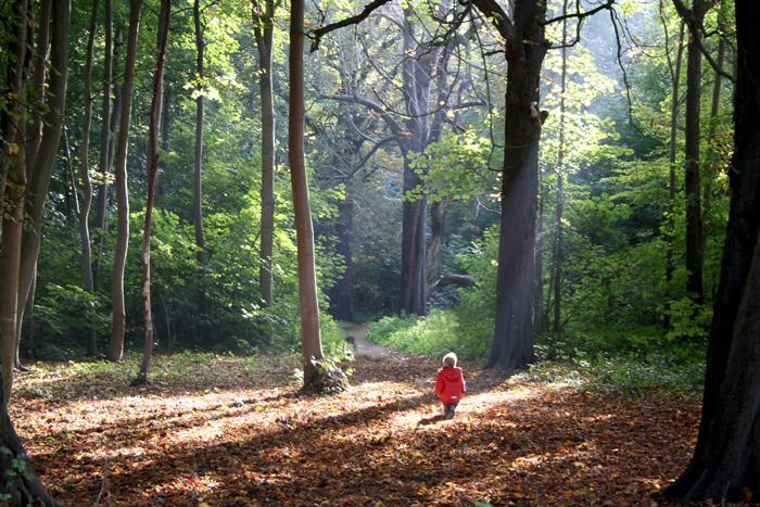 solo en el bosque
