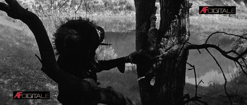 La mosca film collection [BD] – Prima parte
