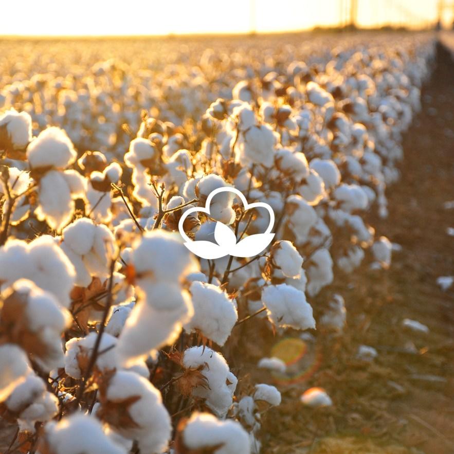 Afew Goods - Cotton Field