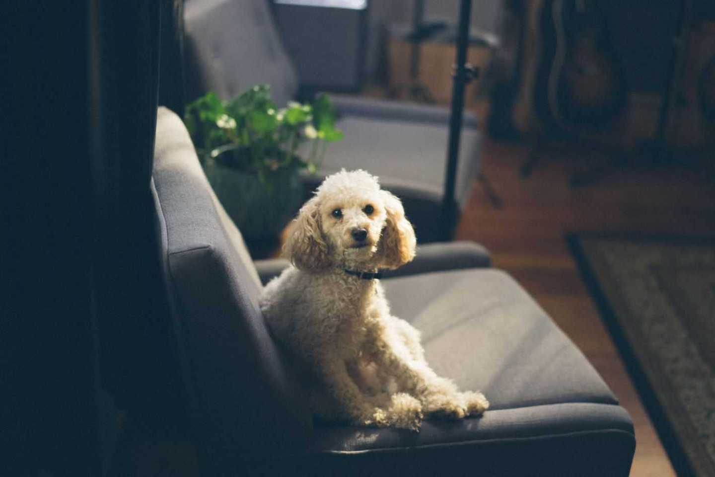 5 Ideas for pet-friendly décor