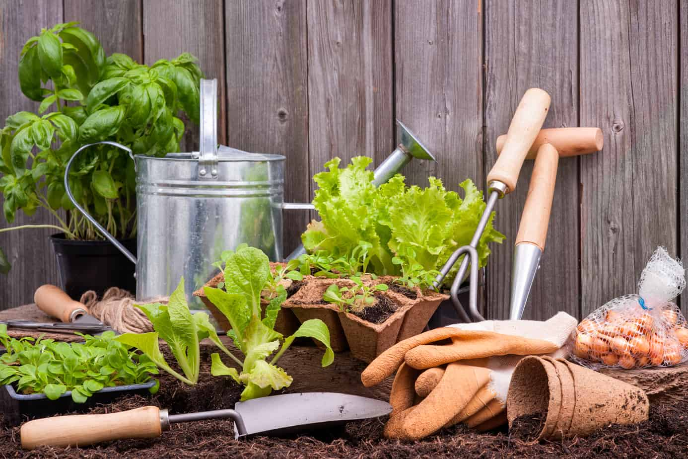 Five Easy Ways to Give Your Garden a Spring Overhaul
