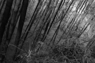trees84