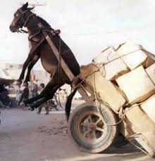 Burden Lifting Donkey