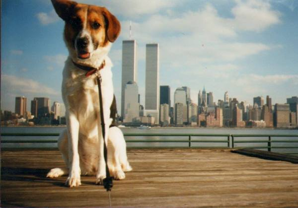 My dog Mickey when I lived across the river from the World Trade Center