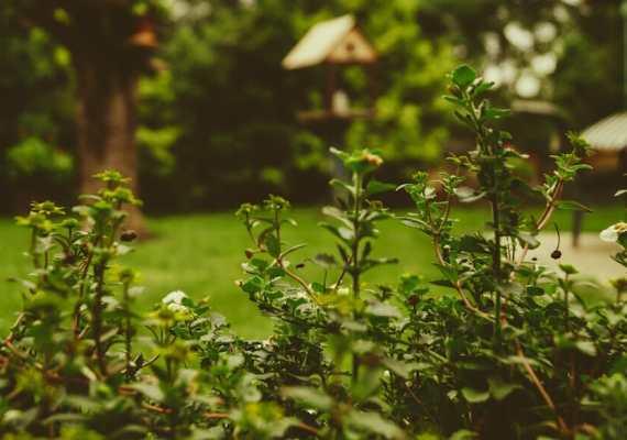 Dumpster Rental for Landscaping