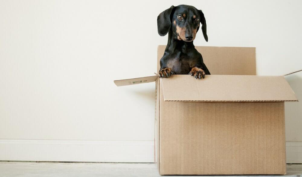 Dumpster Rental for Moving