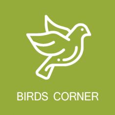 Birds Corner Ekam Homes