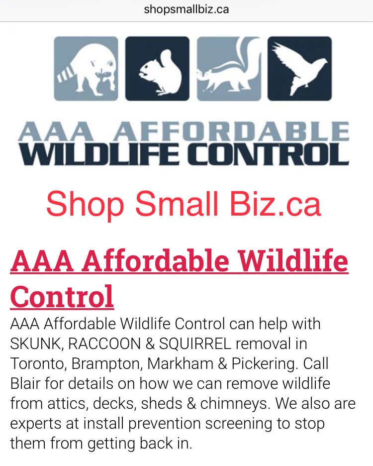 Raccoon Removal, Squirrel Removal, Wildlife Removal Toronto Cost