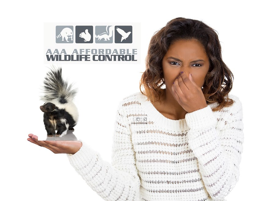 Skunk Removal Toronto - Affordable Wildlife Removal, Affordable Skunk Removal, City Of Toronto Skunk Removal