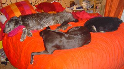 Alla På Pias Säng