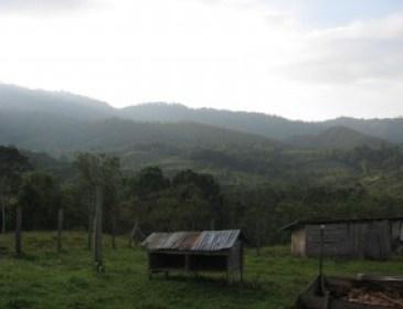 Coffee Brigade, hills